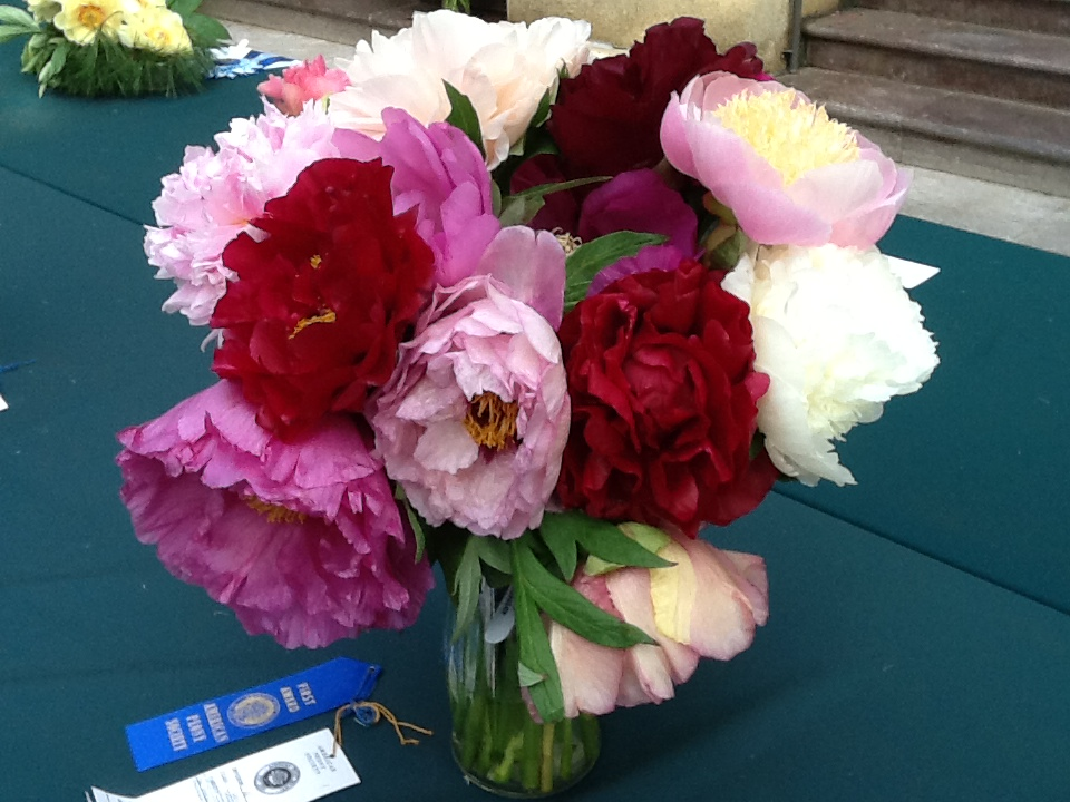 cut flower care - How To Cut Peonies